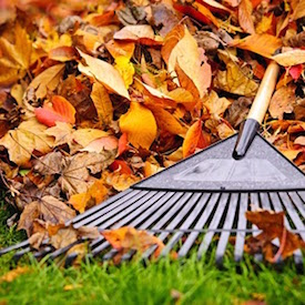 Leaf Raking Clean Up