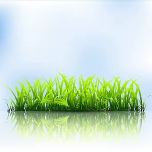 Fescue Lawn Care in Acworth