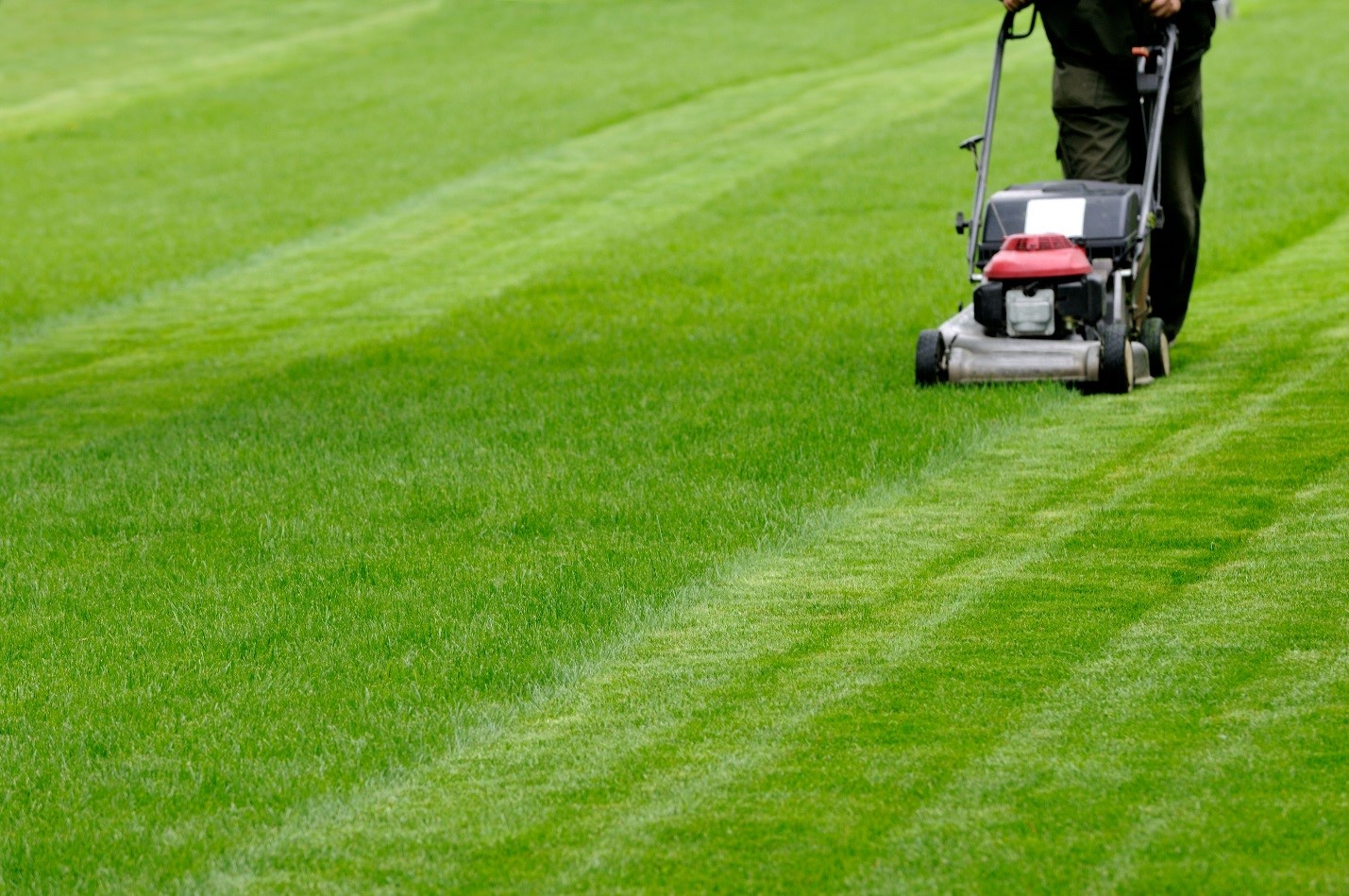 Rely on Lawn Care Service and Simple Steps to Keep That Lawn Lush