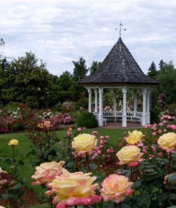 Follow These Tips from Landscapers for Beautiful Roses in Home Gardens