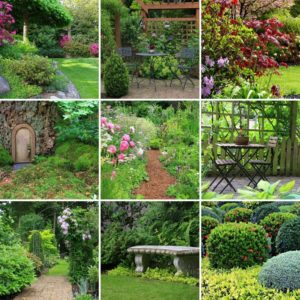 Landscaping Professionals Share the Ideal Plants for Gardens at Home