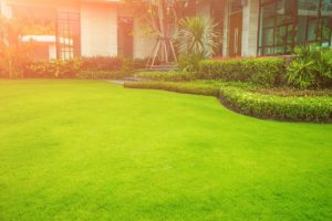 Lawn Care Tips for First-Time Homeowners Who Want a Healthy Landscape