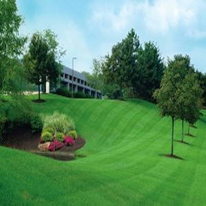 lawn-service-roswell-image