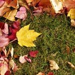 Fall lawn aeration tips Roswell GA
