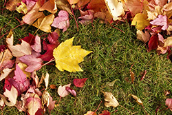 Fall Fescue lawn aeration tips Roswell GA
