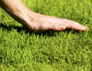 Acworth, GA lawn care service