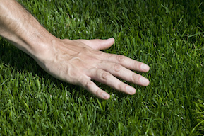 Green Turf Grass