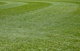 Roswell GA Fescue Turf Grass