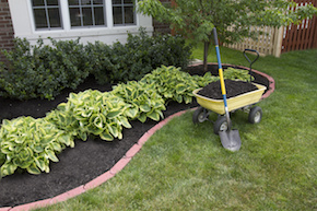 colored mulch chips for ornamental landscape beds