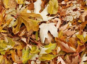 leaf pile on lawn