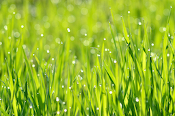Landscape Fertilizing Tips