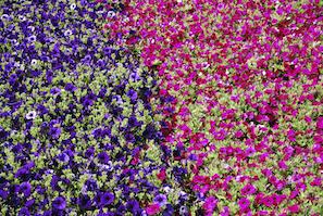 Fertilizing Your Flowers