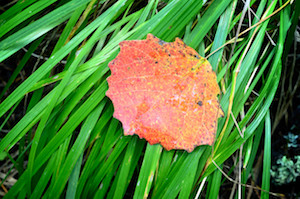 Mulching Leaves for Marietta, GA Lawns