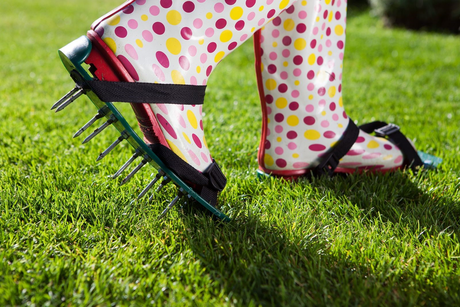 Remove the Mystery of 'When' Regarding Lawn Care Service and Aeration